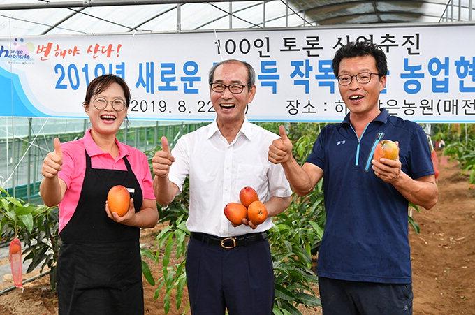 새콤달콤 '애플망고' 올해 첫 수확