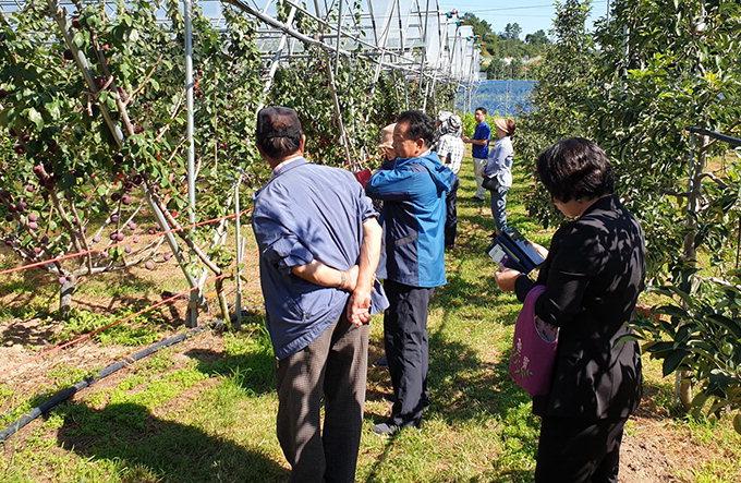 안동시농업기술센터, 기능성 과일 '프룬' 현장평가회