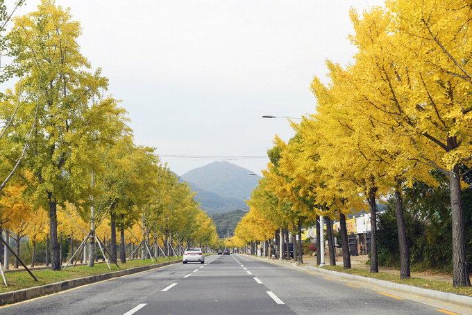 [대구는 지금 가을축제 중] 팔공산 단풍길 즐길까