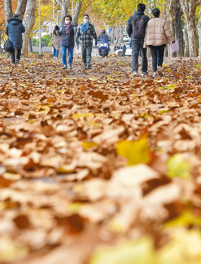 바스락, 사각사각…가을이 가는 소리