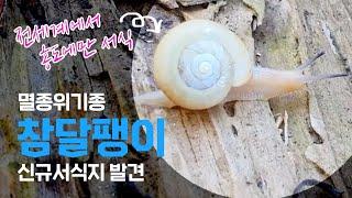 전 세계에서 홍도에만 서식하는 멸종위기 참달팽이 신규서식지 발견