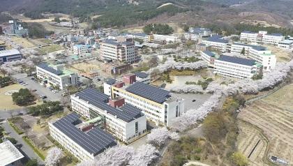 경일대, 꽃구경도 랜선으로…캠퍼스 벚꽃영상 온라인서 호응