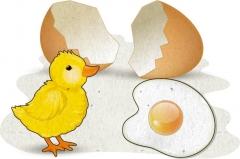 [밥상머리의 작은 기적] 인성교육- 계란프라이와 병아리