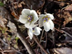 경주국립공원 토함산지구에 봄꽃소식