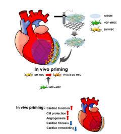 손상된 심장 되살리는 기술  포스텍 참여 국제 공동연구팀이 개발
