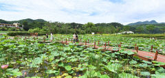 [지금가기 딱 좋은 청정 1번지 영양] (3) 삼지리 영양고추연테마공원