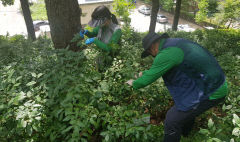 국립백두대간수목원,  차나무 재배시험 사업 본격 시작