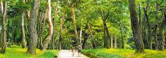 [세계유산 한국의 서원 기행 .2] 영주 소수서원(상)...朱子 강학했던 백록동서원이 모델, 입구엔 870여 그루 '학자수림'