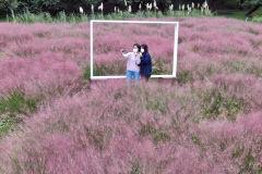 [포토뉴스] 화사한 핑크빛으로 물든 가을! 대구 이월드