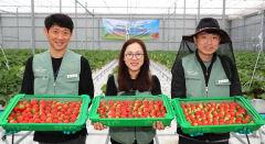 청년이 재배한 딸기 맛은 어떨까...경북 의성 스마트팜, 청년 귀농·정착 이끈다