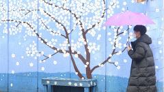 [포토뉴스] 꽃잎 젖을라...비 내리는 김광석길