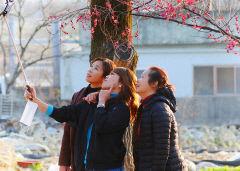 [동네뉴스-시민기자 세상보기] 인흥마을 매화 구경하는 이주여성 자매