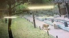 목줄 안한 개 두 마리, 대구 달서구 공원서 길고양이 사냥 논란