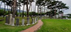 [동네뉴스] 대구 달성군청 앞마당에 비림(碑林)...전문가들