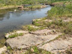 경북 의성군 의성읍 남대천에서 1억년 전 공룡발자국 화석 발견