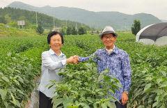 [동네뉴스] 80대에도 1만6천500여㎡ 농사 지으며 알콩달콩 사는 의성 김종학·황분숙 부부