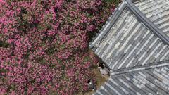 [포토뉴스] 정자와 배롱나무, 그리고 풍경에 갇힌 사람