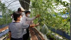 딸기 재배농가 시설하우스 휴작기,  애플수박 틈새 농사로 소득향상