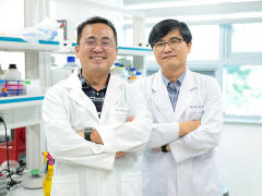 영남대 연구팀, '줄기세포 생존율 향상' 기전 규명