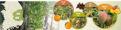 [기후변화 위기를 기회로  4·끝] 경북도, 신소득작목 육성 지원...아열대 작물 재배 매뉴얼 보급 확대…농가간 네트워크 구축