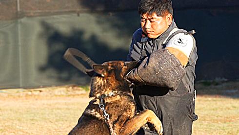 30년차 반려견 훈련사범 김경호 ``名犬 찾아 萬里``