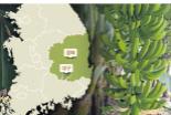 경북도, 아열대 작물 재배 매뉴얼 보급 확대…농가간 네트워크 구축